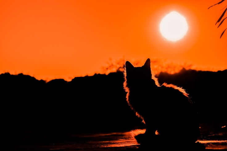 sunset-3008779_1920