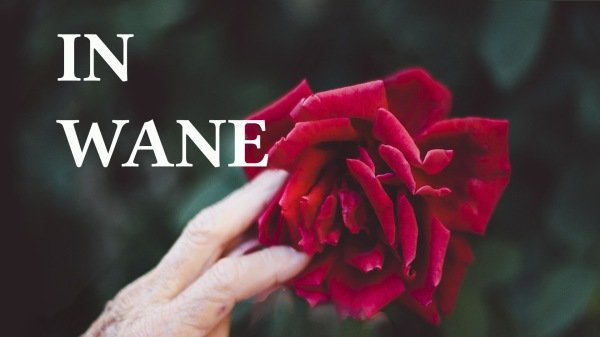 In Wane: A poem by Mona Soorma