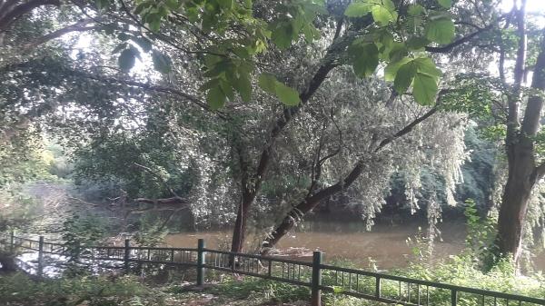 Trees growing along a lake full of rain water